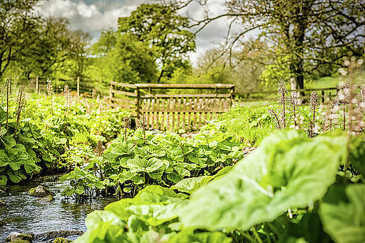 Wild Butterbur by Nick Bywater
