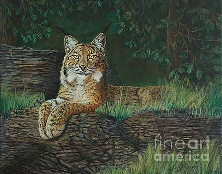 The Ever Watchful Lynx by Bob Williams