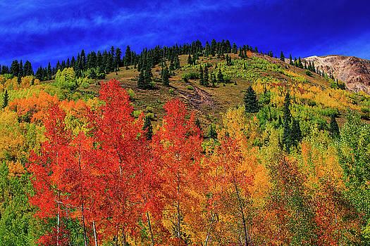 Wild Colors by Kay Kochenderfer