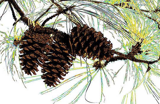 Wild Cones by Russ Mullen