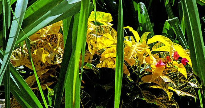 Wild Croton by David Gilbert