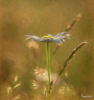Wild Daisy in the Sunlight Late in the Day by Ken Morris