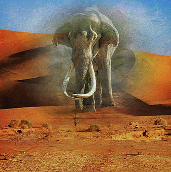 Wild Elephant In The Desert by Clive Littin
