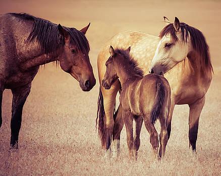Wild Family by Mary Hone