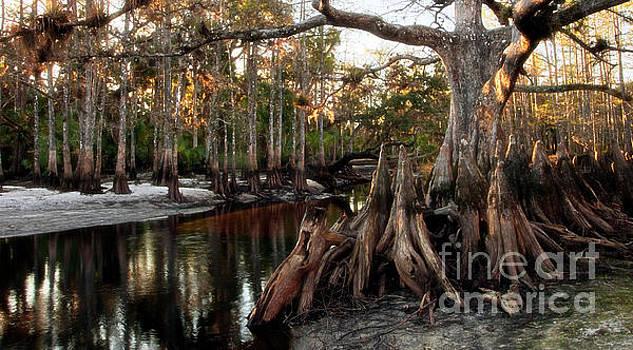 Wild Florida - Fisheating Creek by Matt Tilghman