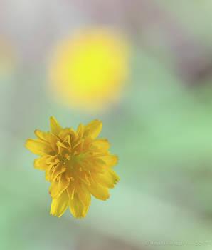 Wild Flower by Henri Irizarri