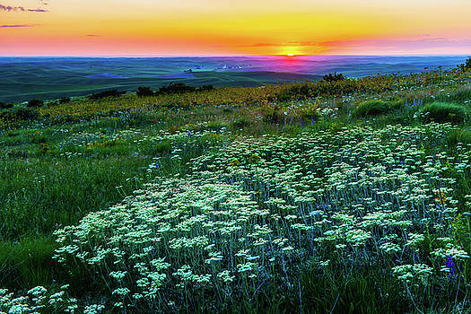 Wild Flower in sunset by Hisao Mogi