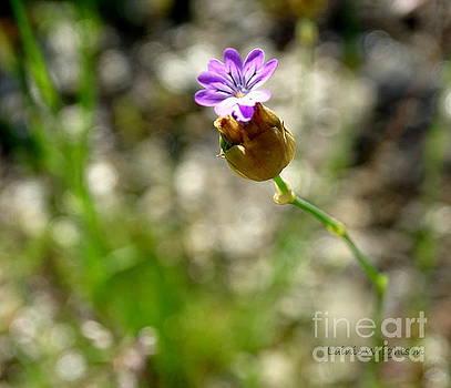 Wild Flower by Lainie Wrightson