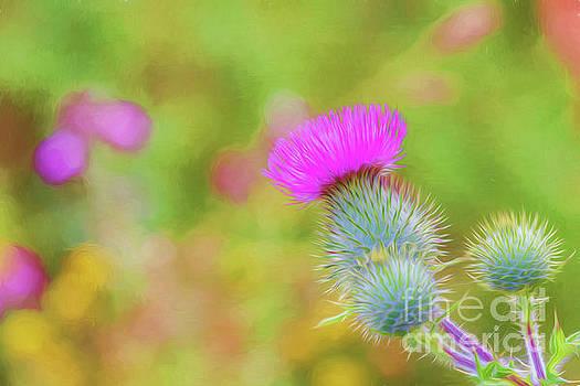 Wild flower by Veikko Suikkanen