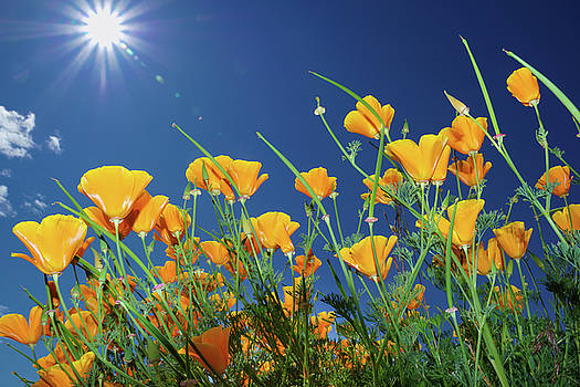 Wild flowers and sun in blue sky by William Freebilly photography