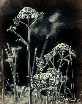 Wild Flowers and Weeds by Ken Morris