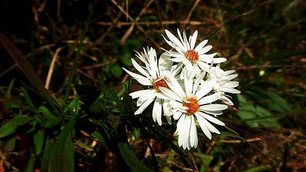 Wild Flowers II by Karen Roberson