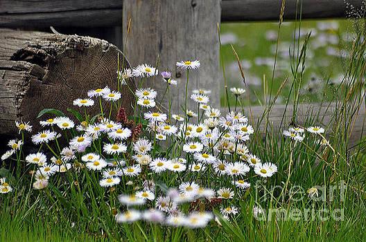 Wild Flowers  by Juls Adams