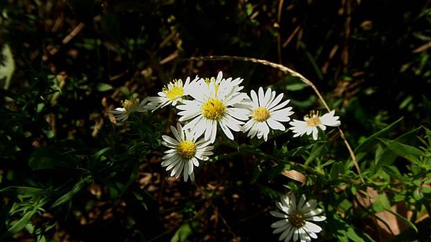 Wild Flowers by Karen Roberson