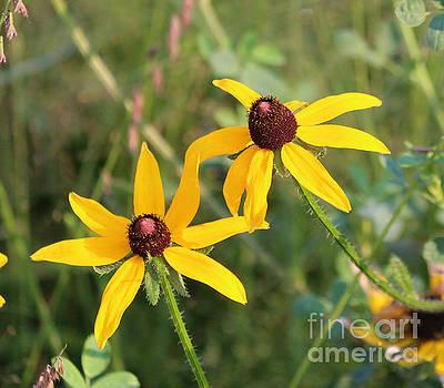Wild Flowers by Lori Tordsen