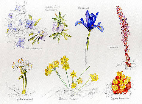 Wild Flowers of Andalucia by Margaret Merry