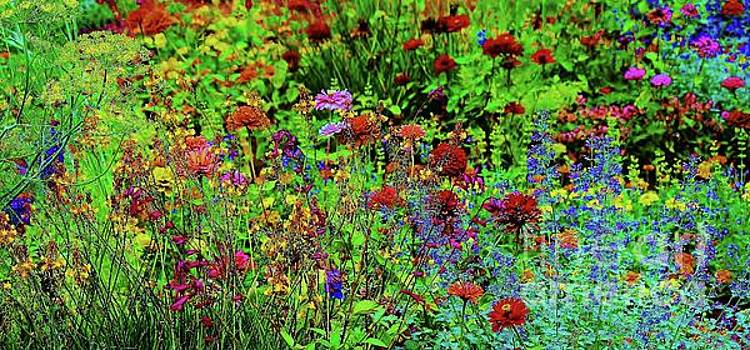 Paulette Thomas - Wild Flowers