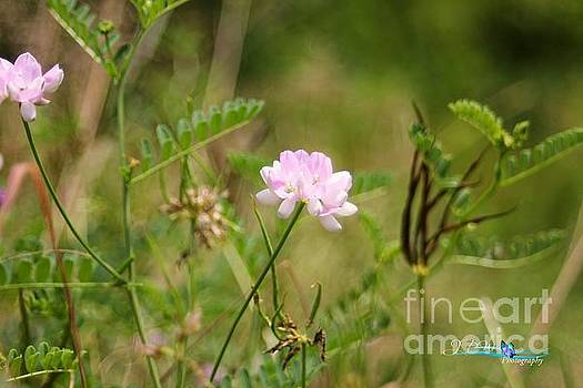 Wild Flowers1 by Jannice Walker