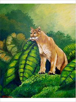 Wild forest Puma by Jean Pierre Bergoeing