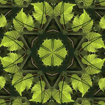 Valerie Kirkwood - Wild Grape Leaf Kaleidoscope