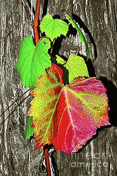 Wild Grape Vine by Kaye Menner by Kaye Menner