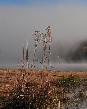 Wild Grass at the Lake by Joyce DeMeester