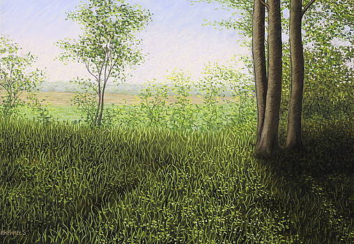 Wild grasses, Phalempin forest in a end of spring afternoon by Raphael Seygnovert