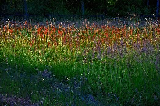 Theresa Pausch - Wild Grasses