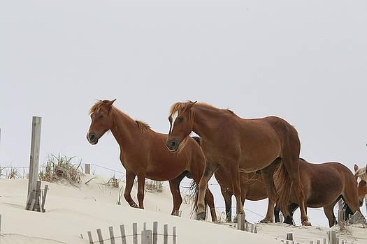 Wild Herd by David Stasiak