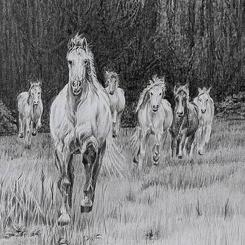 Wild Herd by Sandy Brooks