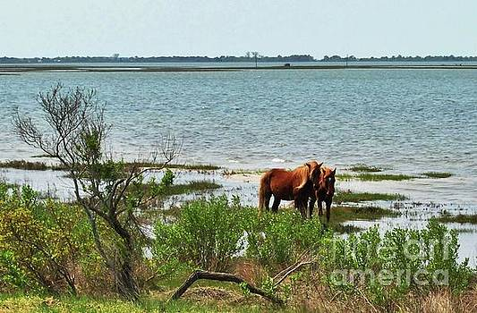 Wild Horses at Assateague by Jeannie Allerton