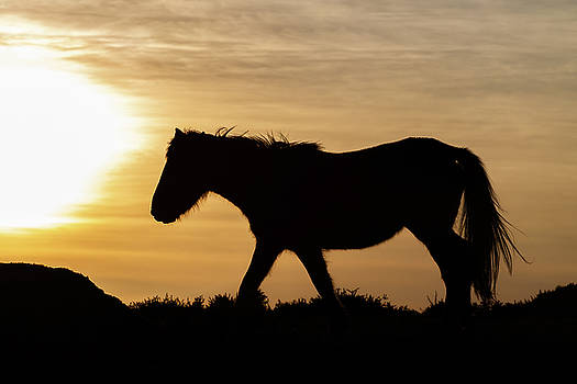 Wild Horse at Sunset by David Garcia Eirin