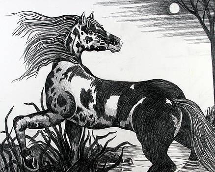 Wild Horse by Bob Crawford
