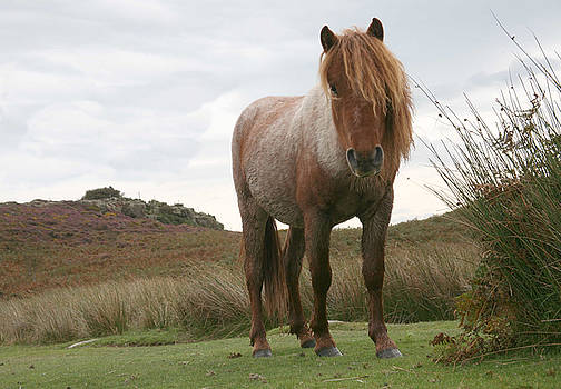 Wild horse by Christopher Rowlands