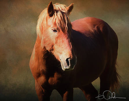 Wild Horse by Gloria Anderson