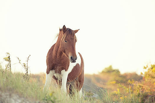 Wild Horse on Beach Dune by Stephanie McDowell