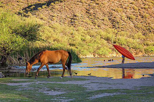 Wild Horse on River With People in Water by Susan Schmitz