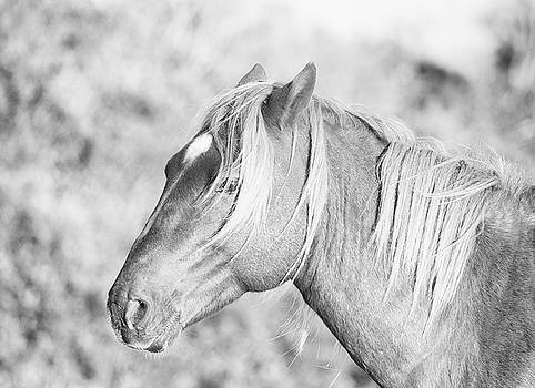 Wild Horse Portrait Black and White by Stephanie McDowell