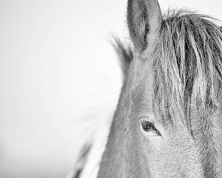Horse Minimal Black and White Print by Stephanie McDowell