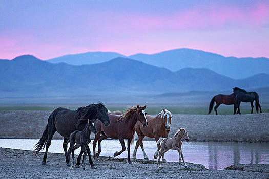 Wild Horse Sunrise by Wesley Aston