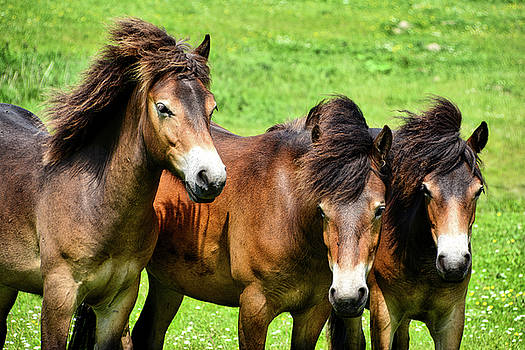 Wild Horses 2 by Ingrid Dendievel