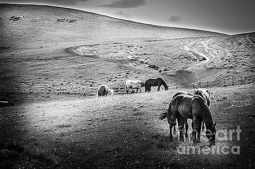 Wild Horses 3 by Arnaldo Tarsetti