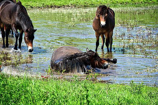 Wild Horses 3 by Ingrid Dendievel