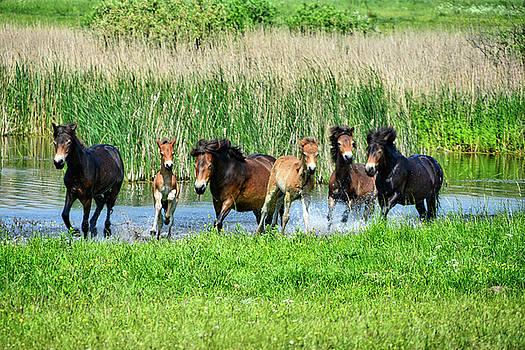 Wild Horses 6 by Ingrid Dendievel