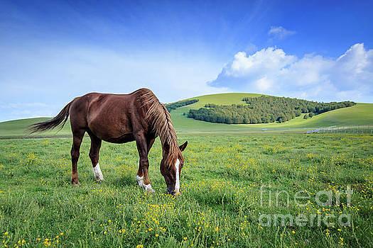 Wild Horses by Arnaldo Tarsetti