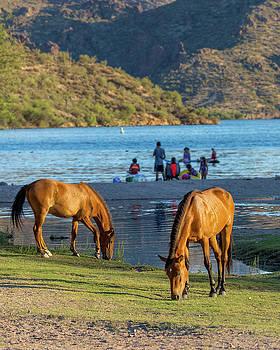 Wild Horses at Arizona River Recreation Site by Susan Schmitz