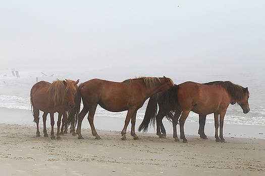 Wild Horses At Corolla, NC 10 by David Stasiak