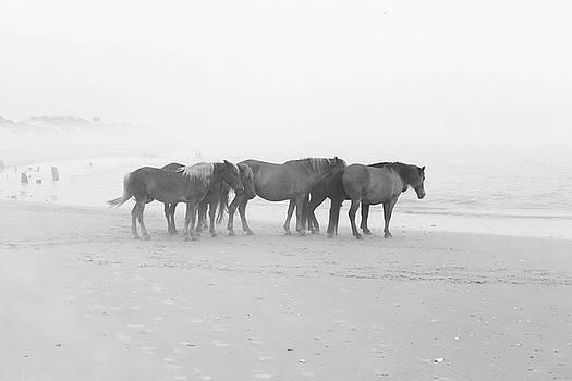 Wild Horses At Corolla, NC 17 by David Stasiak