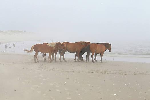 Wild Horses At Corolla, NC 18 by David Stasiak