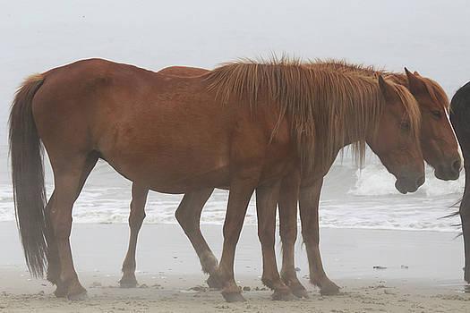 Wild Horses At Corolla, NC 22 by David Stasiak